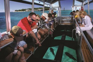 Coral viewing by glass bottom boat