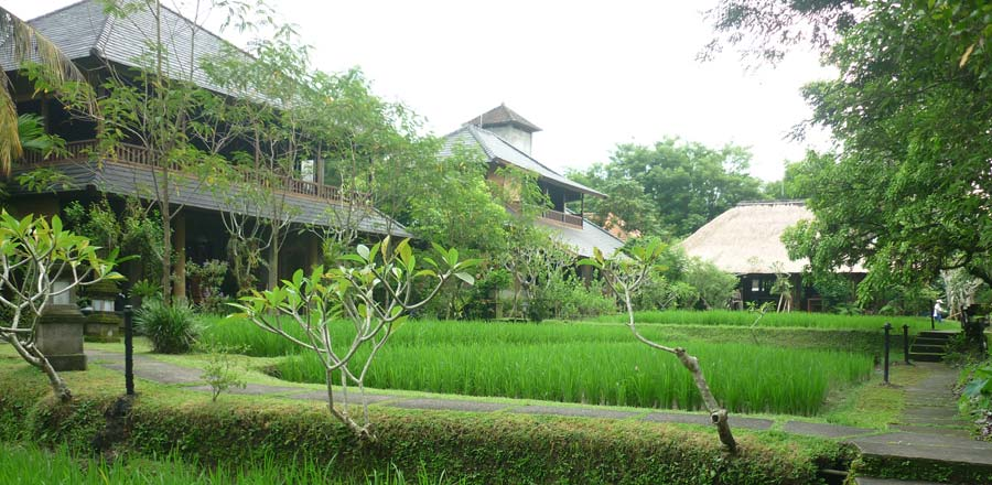 Cheapest hotels you can find in bali tour from bali for Cottage bali