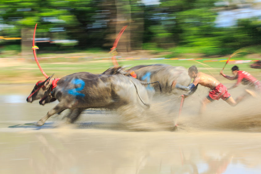 47172876 - motion blurred of buffalo competition in dirt track