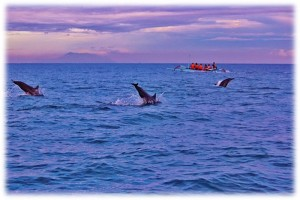 5 Days 4 Nights Bali Dolphin Tour-7