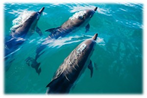 5 Days 4 Nights Bali Dolphin Tour-9